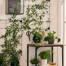Entdecke mehr Natur mit Pflanzen im Wohnraum.