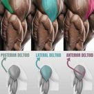 Make Your Lifts Even Better Whilst Building Bigger Rounder Delts   GymGuider.com