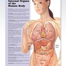Internal Organs of the Human Body Chart 20x26