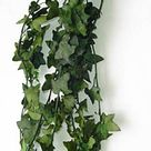 Preserved Hanging Ivy Ivy Preserved Green Ivy Green Hanging   Etsy