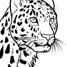 How To Draw A Leopard Head, Step by Step, Drawing Guide, by Dawn