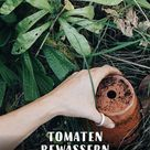 Tomaten (fast) ohne Gießen   Ollas zur Beet-Bewässerung selber machen   Gartenblog Hauptstadtgarten