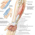 Denard Robinson's Injury