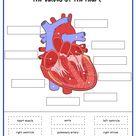 Circulatory System Activity Set