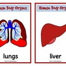 Human Organs Picture Cards