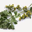 Propiedades de la Artemisia Annua planta milagrosa