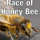 What are Best Types of Honey Bees?