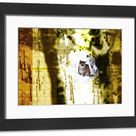 Framed Print. Mountain Lion