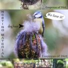 New Bird Feeder? Use These Tips to Attract Birds   Empress of Dirt