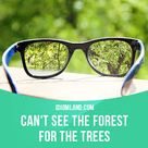 """Idiom Land — """"Can't see the forest for the trees"""" means """"to pay..."""
