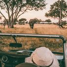 Hwange National Park Safari Guide: All You Need to Know
