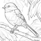 Black-capped Chickadee coloring page   Free Printable Coloring Pages