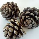 How to Give Pine Cones to Rabbits | Cuteness