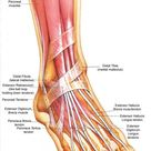 Ankle/Foot Conditions - ProCare Rehabilitation