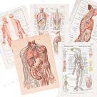 12 anatomical prints NUMERIC FILE, PDF printable anatomic set, curiosity cabinet print, Illustration