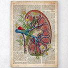 Kidney with flowers - Old dictionary page