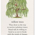 Willow Tree card | Support & Encouragement Card | Cardthartic .com