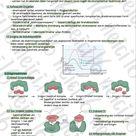 Enzymatik Lernzettel K2 S1