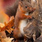 Eichhörnchen füttern im Herbst?
