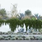 How to Grow Creeping Rosemary - Watters Garden Center