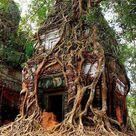 Best Tree Houses