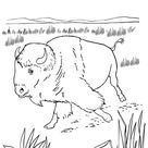 Wild Animal Coloring Pages | North American Bison Coloring Page and Kids Activity sheet