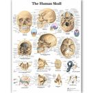 WANGART Human Anatomy Chart Poster Map Canvas Painting Wall Pictures for Medical Education Doctors Office Classroom Home Decor - 50x60cm no frame