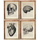 Anatomical Heart Print, Set of 4 Prints, Human Skull Anatomy Dictionary Art Print, Anatomy Poster, B