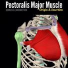 The future of anatomy is here! Learn Anatomy with clear & engaging 3D videos!  Get a better understanding of muscle anatomy, origin and insertions, by understanding the function of each muscle.  If you are an Anatomy student, health or fitness professional, then learning never ends. Improved your understanding of human anatomy and movement! . *The Anatomy chapter available on all our 4 apps, choose the best for you.  For more info, click the link in our bio @muscleandmotion 🕳🕳🕳🕳🕳🕳🕳🕳🕳🕳?