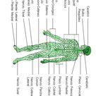 Kindergarten Worksheets The Human Body to learn Spanish 27