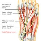 Easy Notes On 【Medial Plantar Nerve】Learn in Just 4 Minutes! – Earth's Lab