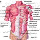 Neck And Shoulder Muscles Diagram