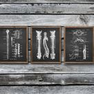 Neuroscience Anatomy of Human Spinal Cord Backbone set of 3 Unframed Decor Art Prints Gift for Neurologist