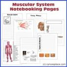Muscular System Notebooking Pages
