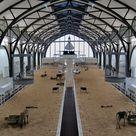 Ein Platz für Tiere – im Hamburger Bahnhof – JOURNAL