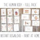 DIGITAL The human body, montessori wall art
