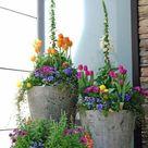 Kübelpflanzen im Garten   Gartenideen mit viel Potenzial
