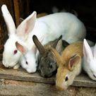 Ten Commandments for Raising Healthy Rabbits   MOTHER EARTH NEWS