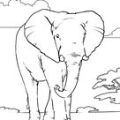 African Elephant coloring page   African Elephant free printable coloring pages animals