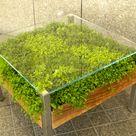 Moss Wall