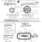Study Sheets - Viren  Bakterien