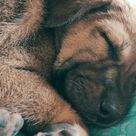 This street dog had ticks, he slept like a baby after getting rid of them