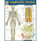 Lymphatic System (Book) - Walmart.com