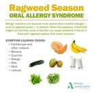If you're allergic to ragweed, certain foods could cause you even more symptoms! Learn about oral al