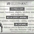 Elephant Meaning and Symbolism