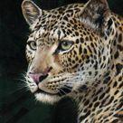 Leopards by Guy Coheleach - Guy Coheleach's Animal Art