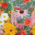 Wildflower Seeds, Meadow Mix Economy Packet