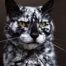 Cats with the most unusual markings 🐈 ☯