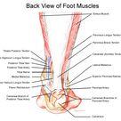 Foot Anatomy   Podiatrist San Angelo, TX