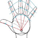 Hand: Proportions